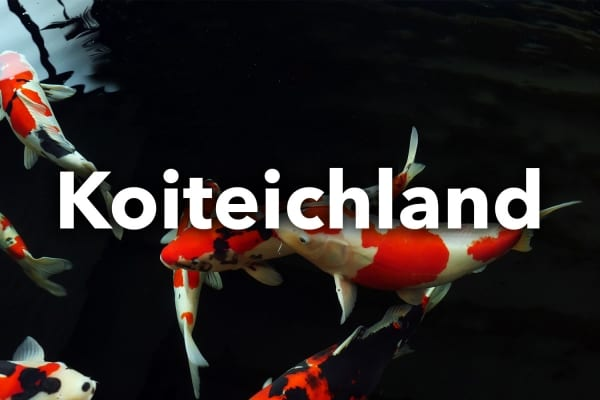 Koiteichland Webseite Webdesign Webauftritt Website Relaunch Fotografie